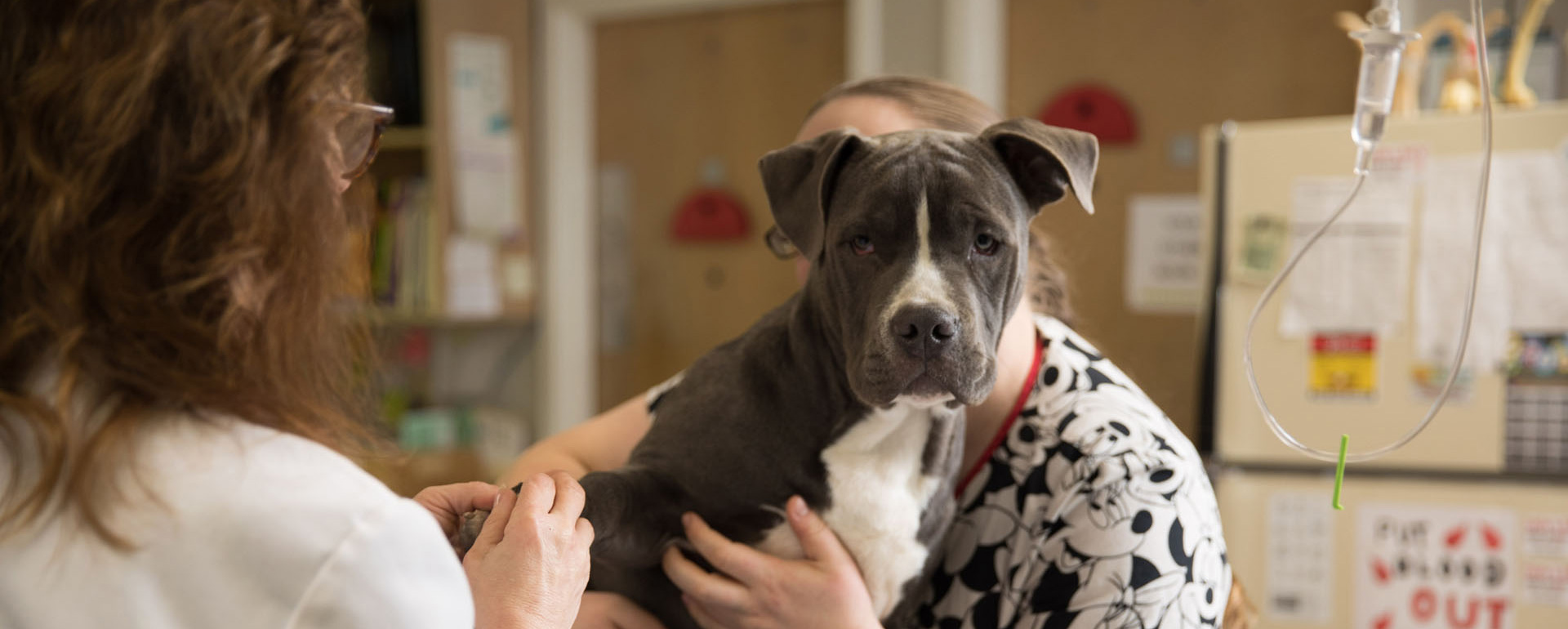 The best care takers of any kind of pets - Dineen Animal Hospital
